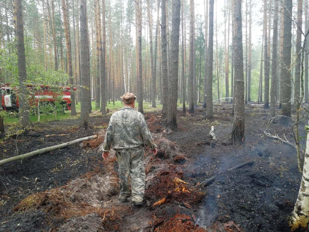 Лесной пожар в Пестяковском районе