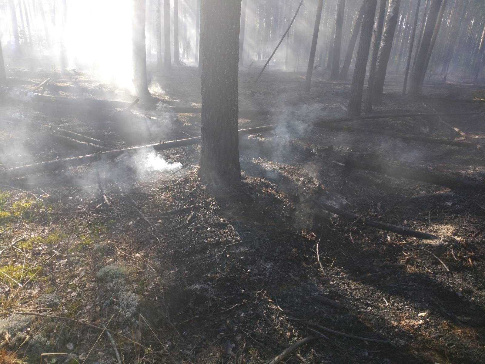 Лесной пожар в Заволжском районе