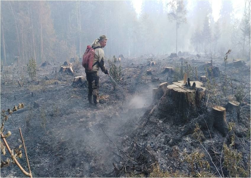 Лесной пожар в Гавриловопосадском районе