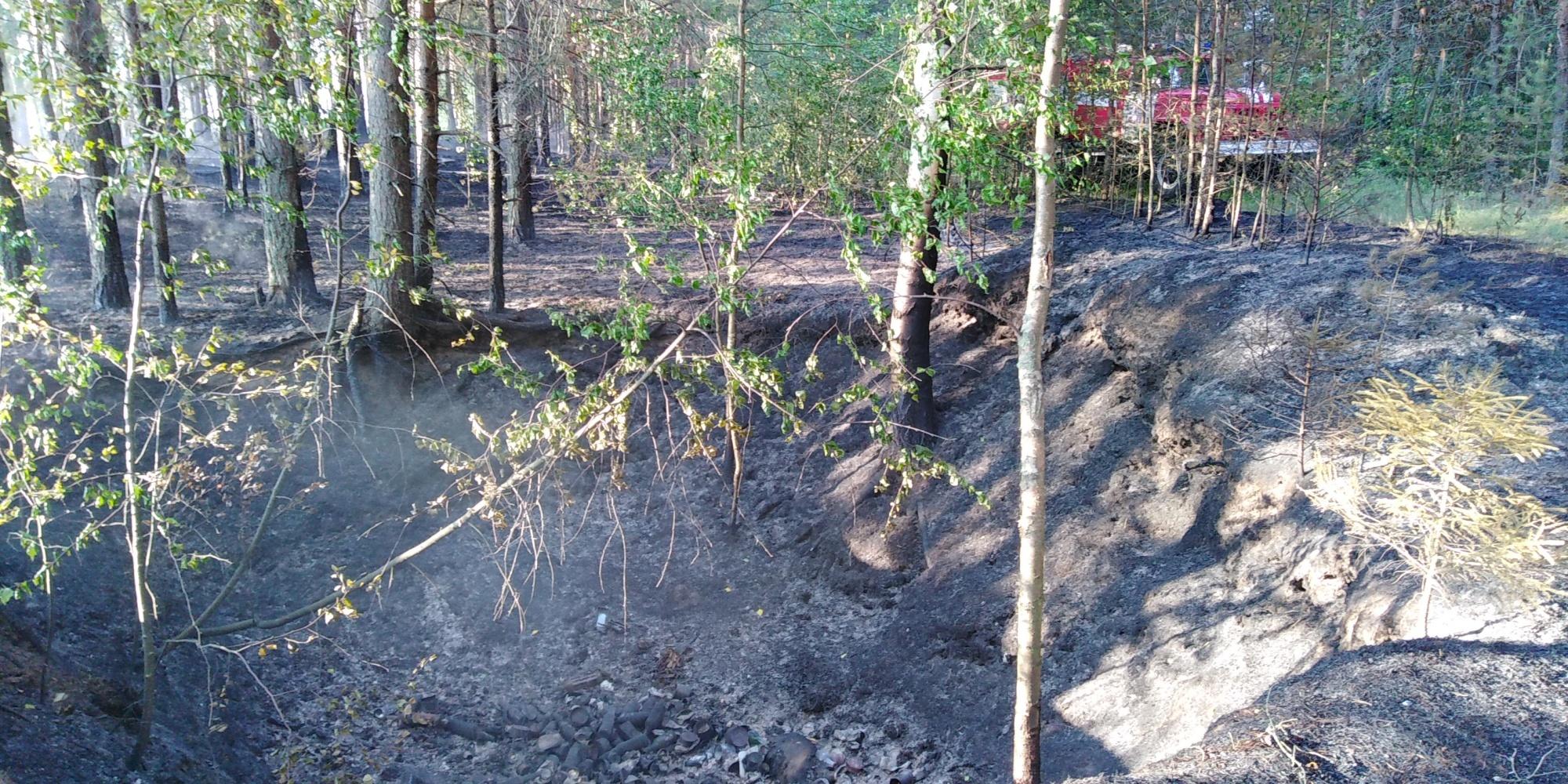 Лесной пожар в Кинешемском районе